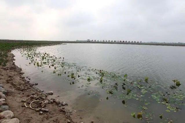 水清、岸绿、景美、花红滹沱河生态修复二期工程欣赏美景