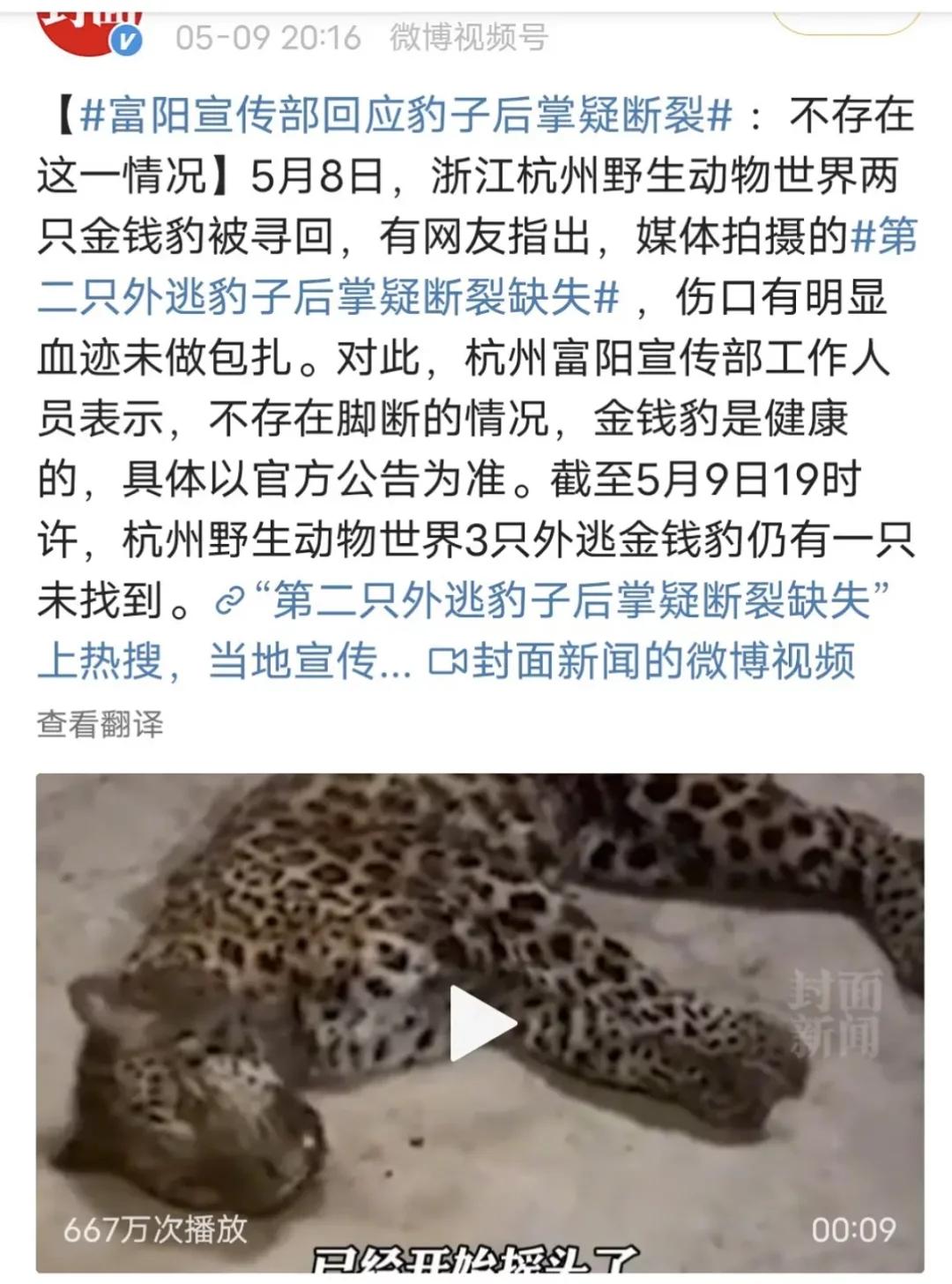 专家:第3只豹子,可能已经死亡……